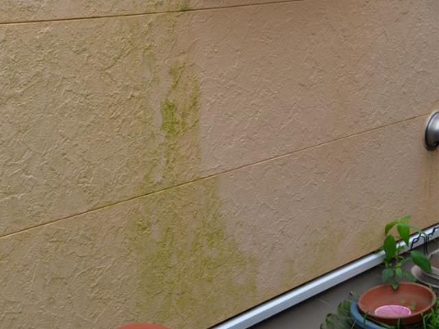 藻や苔が付着しています。